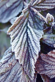 Autumn frosty morning Royalty Free Stock Photography