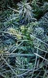 Autumn frozen grass Stock Image