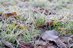 Autumn frozen green grass. Winter seasonal background royalty free stock photography