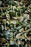 Autumn frozen leaves Royalty Free Stock Photos