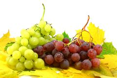 Autumn fruit. Seasonal grapes with leaves on white Stock Photography