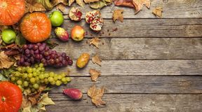 Autumn fruit, banner Royalty Free Stock Photography