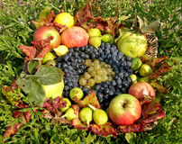 Autumn fruit basket. Decoration of autumn fruit basket Stock Image