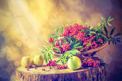 Autumn fruit basket red rowan sun Still Life Royalty Free Stock Photos