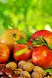 Autumn fruit with chestnuts, walnuts and pomegranates Stock Photos