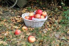 Autumn fruit in the garden Stock Photos