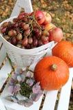 Autumn fruit in the garden Stock Image