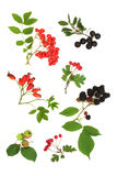 Autumn Fruit Harvest Royalty Free Stock Image