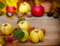 Autumn fruit Royalty Free Stock Photography