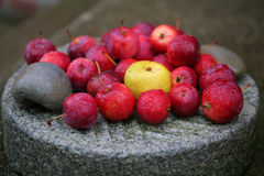 Autumn fruit and raindrops on a granite stone. A selection of autumn fruit: rainwet red apples and yellow quince on a grinding stone Stock Photo