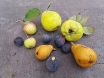 Autumn fruit still life. Figs, pears, quinces, apples, fruit, september, harvest, garden, garden Stock Image