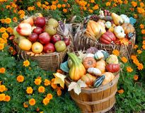 Autumn fruit and vegetables. Baskets of autumn fruit and vegetables including apples and squash Stock Image