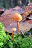 Autumn Fruiting Fungi Imagen de archivo
