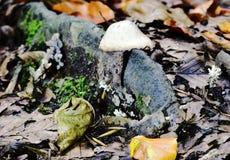Autumn Fruiting Fungi images libres de droits