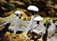 Autumn Fruiting Fungi photos libres de droits