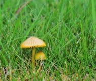Autumn Fruiting Fungi photo libre de droits