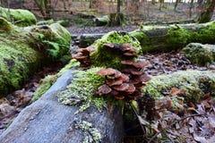 Autumn Fruiting Fungi photographie stock