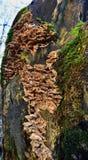 Autumn Fruiting Fungi image stock