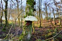 Autumn Fruiting Fungi images stock