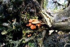 Autumn Fruiting Fungi image libre de droits
