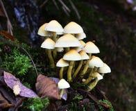 Autumn Fruiting Fungi Stock Photos