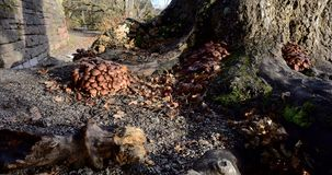 Autumn Fruiting Fungi Stock Photography