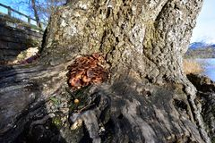 Autumn Fruiting Fungi Royalty Free Stock Photos