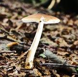 Autumn Fruiting Fungi Stock Image