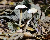 Autumn Fruiting Fungi. Sunlight on the Autumn Fruiting Fungi Royalty Free Stock Photos