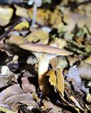 Autumn Fruiting Fungi. Sunlight on the Autumn Fruiting Fungi Stock Photo