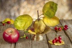 Autumn Fruits Fotografia Stock