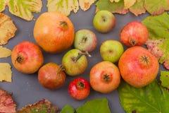 Autumn Fruits royalty-vrije stock afbeelding