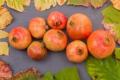 Autumn Fruits royalty-vrije stock afbeeldingen