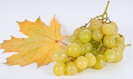 Autumn fruits. On the white background Royalty Free Stock Image