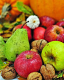 Autumn fruits. Still-life picture with autumn fruits stock image