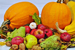 Autumn fruits. Still-life picture with autumn fruits royalty free stock photos
