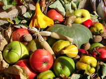 Autumn fruits. Colorful autumn fruits with leaves Stock Image