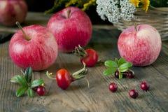 Autumn Fruits Photos libres de droits
