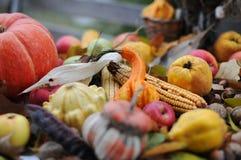 Autumn Fruits Stock Afbeeldingen