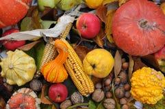 Autumn Fruits Royalty-vrije Stock Foto