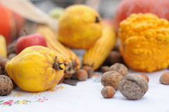 Autumn Fruits Photo stock