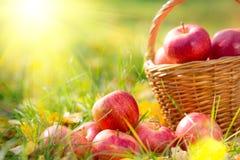 Autumn Fruits Fotografía de archivo