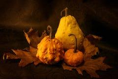 Autumn Fruits Fotografia Stock Libera da Diritti
