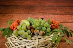 Autumn Fruits Foto de Stock