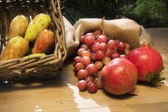 Autumn Fruits Royaltyfri Fotografi