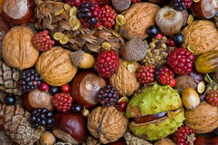 Autumn fruits. Composition with autumn specific fruits such as chestnuts, blackberries, acorns and pinecones Stock Photo