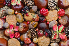 Autumn fruits Royalty Free Stock Photography
