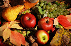 Autumn fruits Royalty Free Stock Photos
