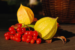Autumn fruits Stock Images