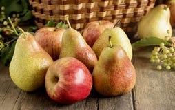 Autumn Fruits Stock Foto's